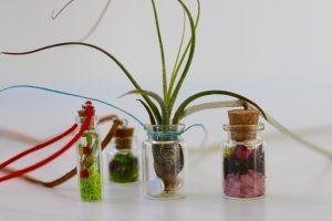 Living plant pendants